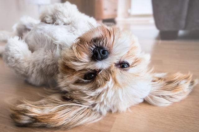 pes na podlahe.jpg